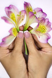 Few freesias in hands Stock Images