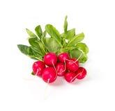 Few fresh radish on white Royalty Free Stock Photography