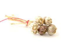 Few garlic heads Royalty Free Stock Photo