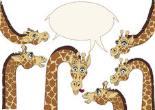 A few giraffes background. A few giraffes were frozen in amazement and watched with curiosity Royalty Free Stock Photography