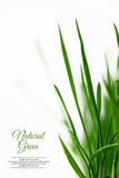 Few green blades of grass. Isolated on white Royalty Free Stock Photos