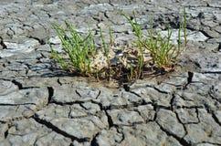 Few green straws in dry deserted land Stock Image