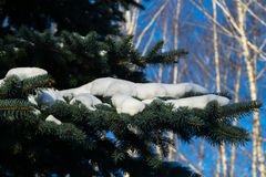 Few green tree branches in the white snow. Some green pine branches covered with snow on a background of white snow on the street on a cold winter day, there is stock photography