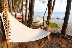 A few hammocks are hung between the pines on the beach of Black sea for a comfortable rest.  Royalty Free Stock Images