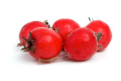 Few haw berries Royalty Free Stock Images