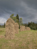 Few of hay Royalty Free Stock Photography