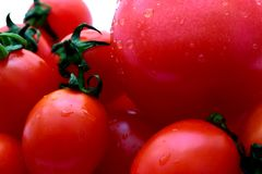 Red mini tomatoes and one big tomato. Some mini-tomatoes and one large tomato on a white background. On red vegetables droplets water. Close-up royalty free stock image