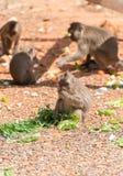 Few monkeys. Royalty Free Stock Image
