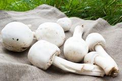 A few Mushrooms on cloth. Champignons Stock Image