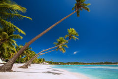 Few palm trees over tropical lagoon with white beach royalty free stock photo