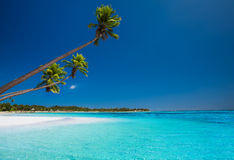 Few palms on deserted beach of tropical island Royalty Free Stock Photo