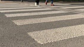 Few pedestrians cross small road by zebra crossing. Few pedestrians cross over small road by zebra crossing at sunny day. Pedestrian foot thwart the road by stock video