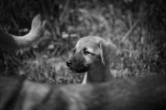 Portrait of a little homeless puppy. Big head. Monochrome stock images