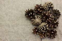 A few pine cones Royalty Free Stock Photography