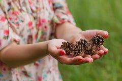 Few pine cones in woman hands, closeup Stock Photo
