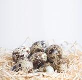 Few przepiórek jajka w gniazdeczku Obraz Stock