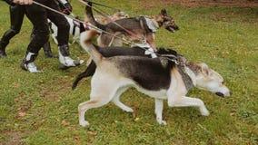 Few psy są nieprawdopodobni smycz Gospodarzi przychodzą od behind zbiory