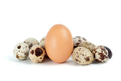 Few Quail Eggs And Single Hen Egg Royalty Free Stock Images