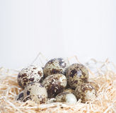 Few quail eggs in nest Stock Image