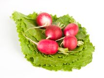 A few radishes on lettuce Royalty Free Stock Images