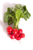 Few raw radishes Royalty Free Stock Photos