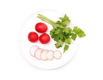 Few raw radishes and parsley Royalty Free Stock Photography