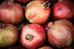 Few red mellow pomegranates in range. Stock Photography