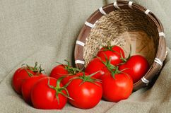 A few red tomatoes near the small basket. On the grungy background Stock Photos