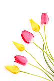 Few red and yellow tulips isolated Royalty Free Stock Photos