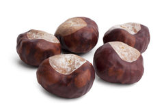 A few ripe brown dried chestnuts Stock Image