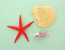 A few of sea shells Stock Images