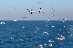 Few seagulls flying over blue sea Stock Photos