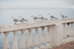 Few seagulls sitting on balustrade against the sea royalty free stock photography