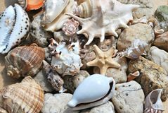 Few seashells Royalty Free Stock Photo