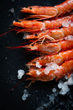 Few shrimp. On black ground Royalty Free Stock Photography
