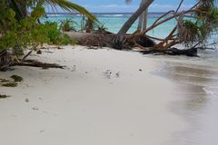 Few small cute white birds on white sand beach. Maldives, Indian ocean. Turquoise water, blue sky and white clouds. Gorgeous nature background stock image
