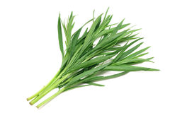 A few sprigs of green tarragon Royalty Free Stock Photography