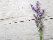 Few sprigs of lavender Royalty Free Stock Image