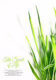 Few sunny green blades of grass Royalty Free Stock Photo
