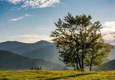 Few trees on edge of a hillside in evening light Royalty Free Stock Image
