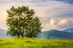 Few trees on edge of a hillside at sunrise. Few trees on edge of a grassy hillside at sunrise with gorgeous sky. lovely autumnal scenery in mountains Royalty Free Stock Photo