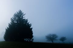 A few trees enshrouded in fog. Stock Image