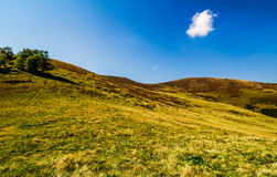 Few trees on grassy hills in august Royalty Free Stock Images