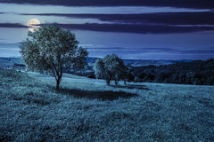 Few trees on hillside meadow at night Royalty Free Stock Images