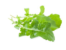 Few Twigs of Choice Rucola Royalty Free Stock Photos