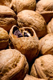 Few walnuts Royalty Free Stock Images