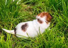 A few week old puppies run around the garden. A few week-old puppies run around garden royalty free stock photography