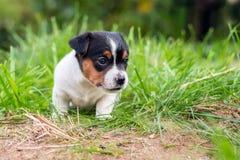 A few week old puppies run around the garden. A few week-old puppies run around garden stock images
