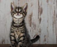 Few weeks old tabby kitten tomcat on light wooden background Stock Photo