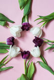 A few white and violet tulips on a pink background in a round shape. Place for lettering Royalty Free Stock Images